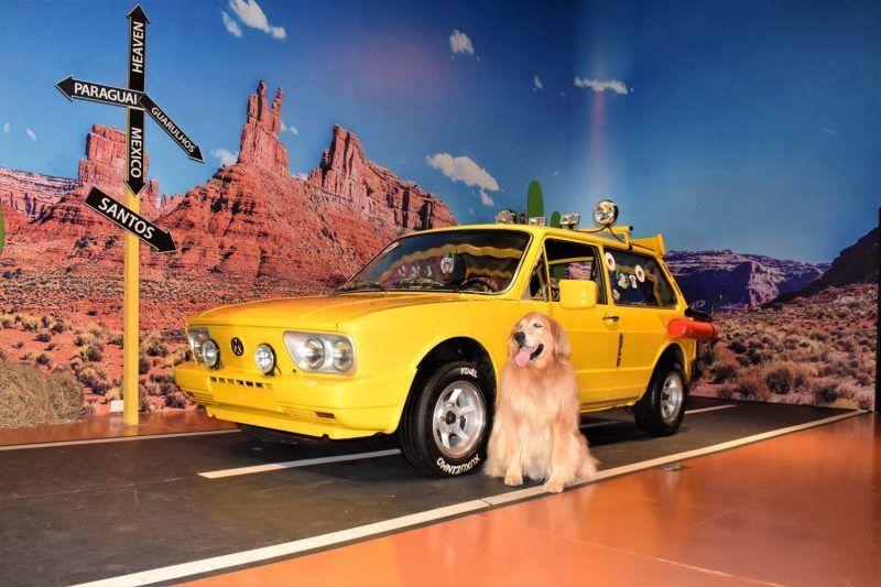 Pet Friendly: traga seu pet para ser uma estrela de cinema no Movie Cars